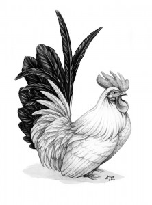 2017 Year of the Cock