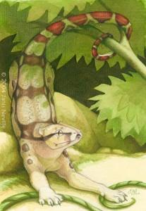 Panthera constrictor
